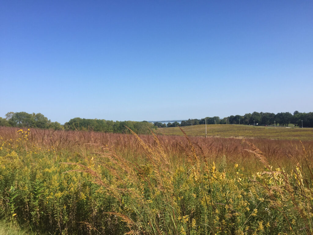 A view across the restored prairie at Holy Wisdom Monastery, looking toward Lake Mendota in the distance